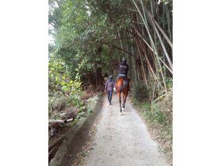 竹林をのんびり散歩します♪