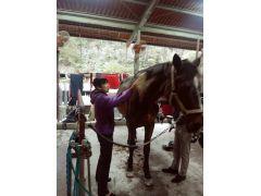 馬のお世話体験♪
