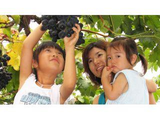 甘くて美味しいプリップリの葡萄を40分間食べ放題!秋の味覚を山梨で味わう旬のブドウ狩り体験付き日帰り夕食プラン♪