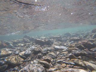 国立公園内の秋川渓谷。水がとても綺麗です!!