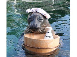 箱根園の水族館と芦ノ湖の絶景温泉、龍宮殿本館を満喫♪