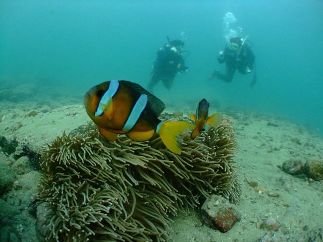 南紀白浜の海でスキューバ体験ダイビング!!【コロナ対策1グループ貸し切りプラン】