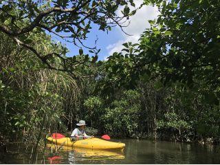 誰もいないマングローブ原生林を漕ぎ進んでいきます。