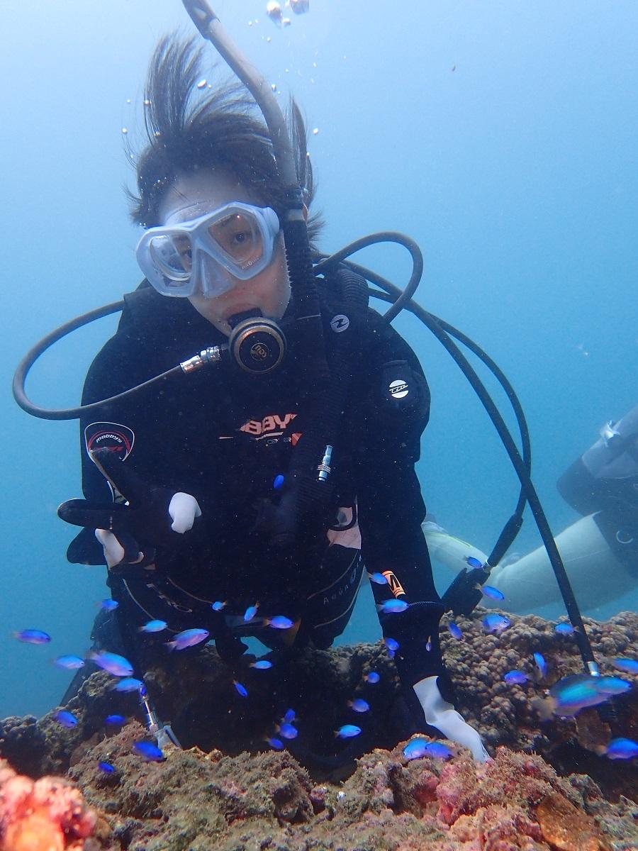ポッコリ小島ボートプラン 初心者歓迎 ♪秋からのダイビングベストシーズンで熱帯魚...