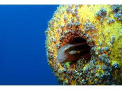 かわいい海の生き物にもあえます!