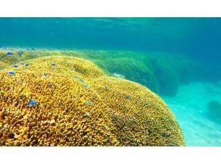 黄金にかがやくユビエダハマサンゴ