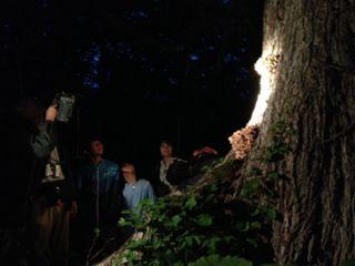 夜の森をドライブ!圧巻の星空と、野生のシカや野うさぎ、ツキノワグマが見られるかも!?スポットライトツアー