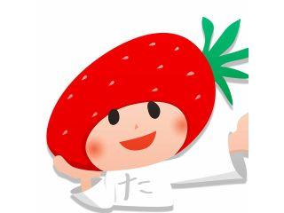 【いちご摘み取り体験】300グラムのいちごを摘み取り体験!章姫・かなみひめ・かおり野・あまクイーン・よつぼし・紅ほっぺを栽培しております!※コロナ対策実施中※