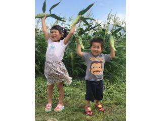 福山ファームのスイートコーンは小さな子供から大人まで誰でも美味しくいただけます。