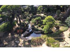 江戸時代から残る「鶴亀の庭」。長寿の象徴である鶴と亀が雄雌2匹ずつ見立てられた庭です。樹齢300年以上と言われる松は圧巻です。5月初旬には、アヤメが見事です。