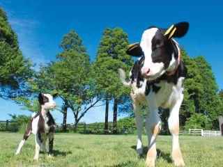 動物たちの命のあたたかさ。牛さんやヤギさんと戯れよう!
