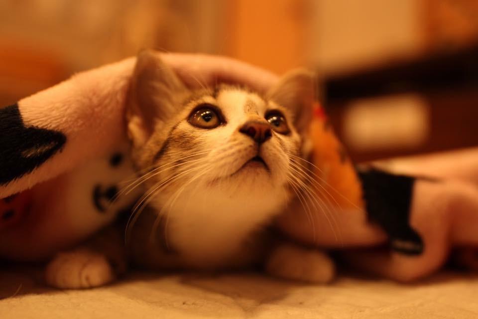 \10%割引!/*◆伊豆で初の本格ねこカフェ◆*猫のおやつ付き(1グループ1個)...