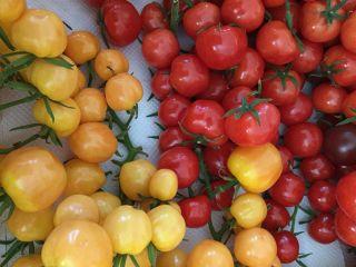 ●桑名×トマト狩り●糖度の高いひめトマを食べ放題+お土産付き♪ご友人同士やカップルでのご参加ももちろんOK!