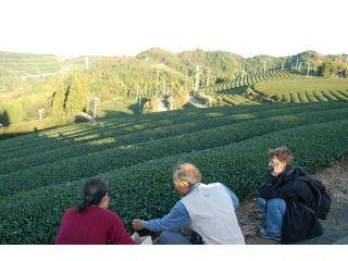 【秋冬限定】★お茶農家さんが案内する世界農業遺産★茶草場農法の茶畑さんぽと季節のほっこり里山御膳