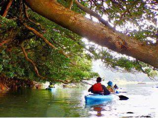 水位によっては、川に伸びた木の枝の下をカヌーでくぐって進むツーリングコース。