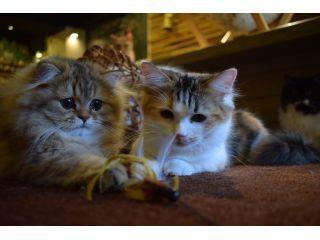 猫ちゃんと触れ合ったことがない方も、安心して猫ちゃんと触れ合って頂けます。