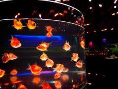 日本最大級の金魚水族館☆