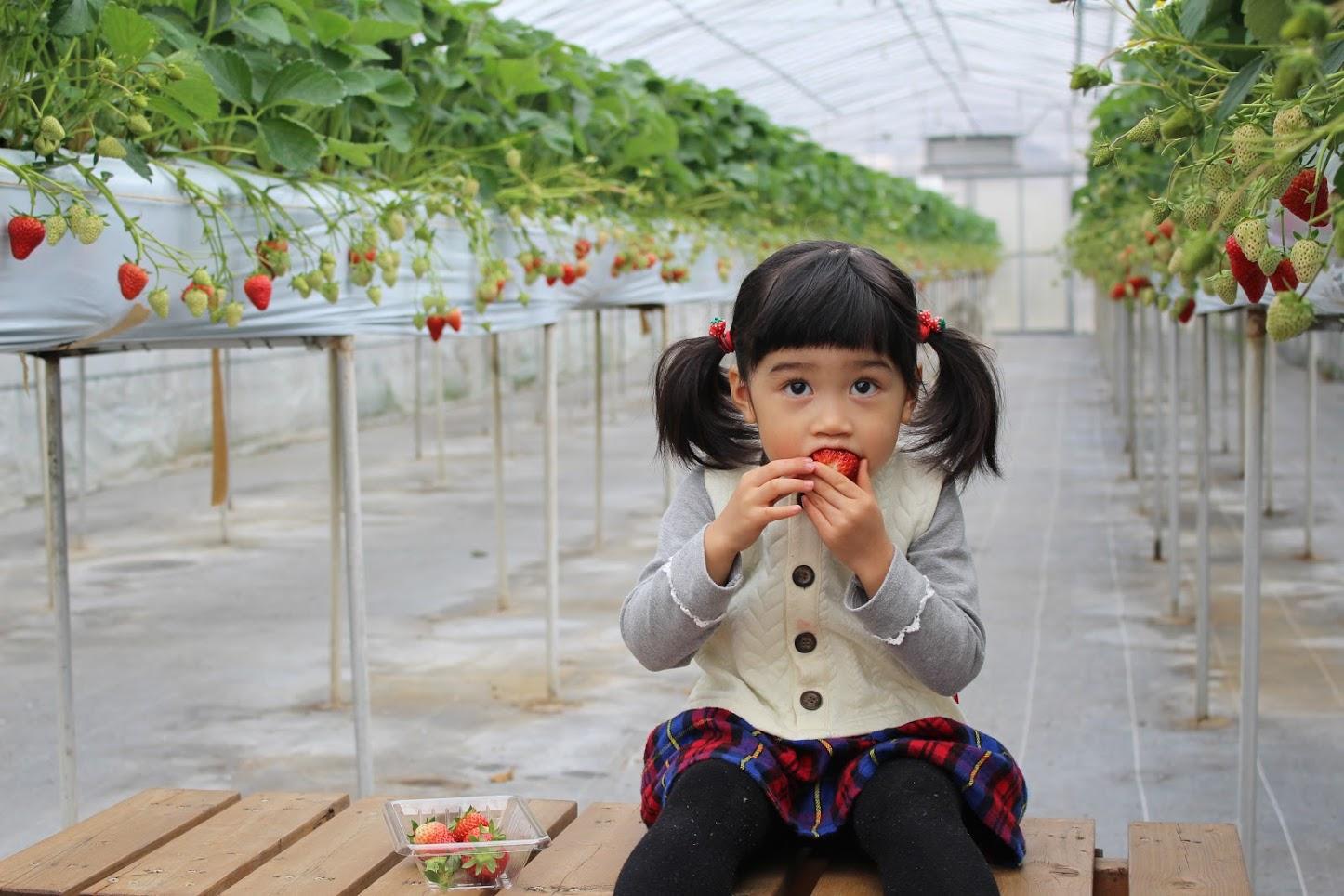 12月7日~4月12日◆60分食べ放題◆食べれるのはここだけ!徳島生まれ『うずし...