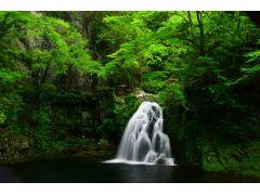 新緑の千手滝