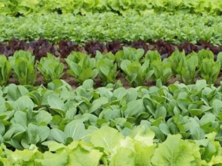 【新鮮な春野菜の収穫体験★】レタス・菜の花など旬のお野菜を畑で収穫!春の味覚を満...