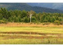 時には、草原に水が溜まり、また違った景色をみる年もあります。