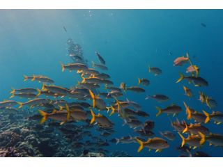 魅力的な魚影の濃いエリアもチョイス!