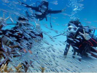 目の前に魚いっぱいのスポットで楽しめます!