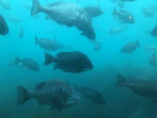 展望室から見た魚たち