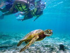 比較的に浅い水深でウミガメと遭遇。浮力体につかまれば泳ぐの苦手でも楽しめます♪