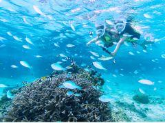 美しい珊瑚礁で癒しのひと時を