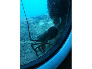足摺海底館 ※自然そのままです。伊勢海老がいつでも見られるとは限りません。