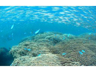 日本最大級の大きさ「シコロサンゴの群集」見残し海岸の湾内