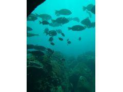 海底館の日常