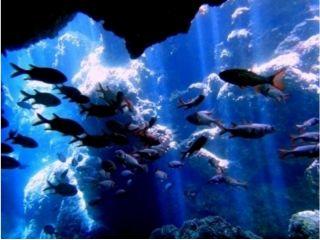 【沖縄・青の洞窟】送迎付き ビーチ体験ダイビング