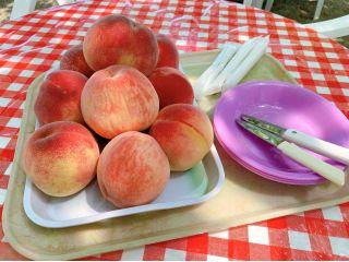 休憩所で桃の食べ放題40分間♪〈ペット同伴OK!〉プラン
