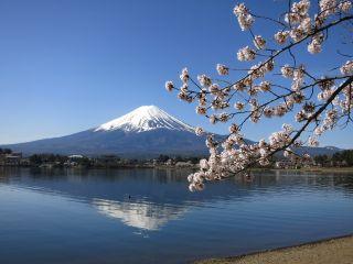 季節ごとに表情の違う富士山をお楽しみ頂けます♪