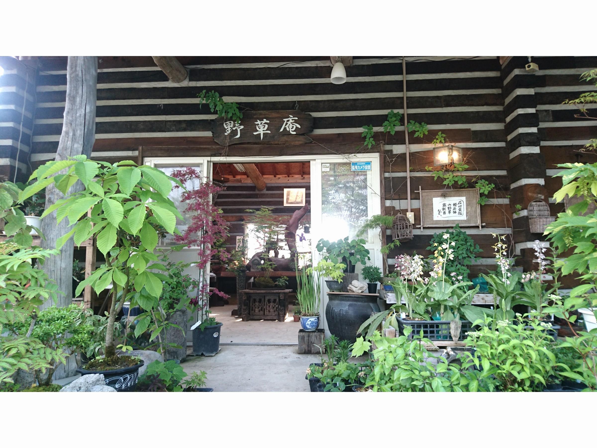 ちょっとおしゃれな手作り盆栽★手作りの軽石鉢を使った石付盆栽の体験教室♪
