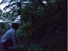 あたりが暗くなるのに合わせて、枯れ葉の上や草木の枝から光り始める。