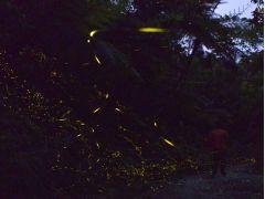 気がつくとあたりは暗くなり、飛び出したホタル達にかこまれる。