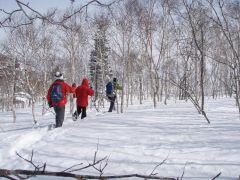 林の中を歩くことも。