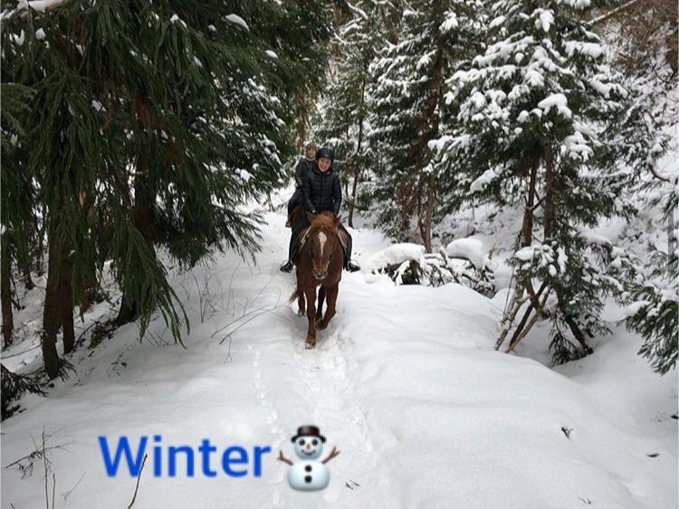 【外乗体験♪60分コース】 山の冬景色を楽しみながら馬とお散歩★カップルやファミ...
