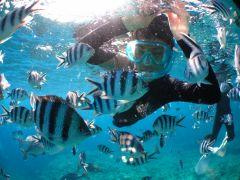 カラフルな熱帯魚にエサやりもできるのでシュノーケリングの楽しさアップです!