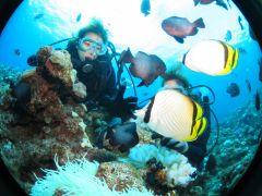 カラフルな熱帯魚にエサやりを楽しめるのも体験ダイビングの魅力です!