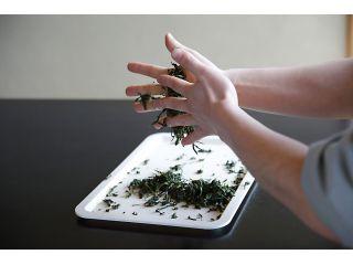 手もみ緑茶づくり~直接茶の葉を手で揉み、緑茶を作ります