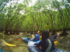 壮大なマングローブ域を進み自然を感じよう!