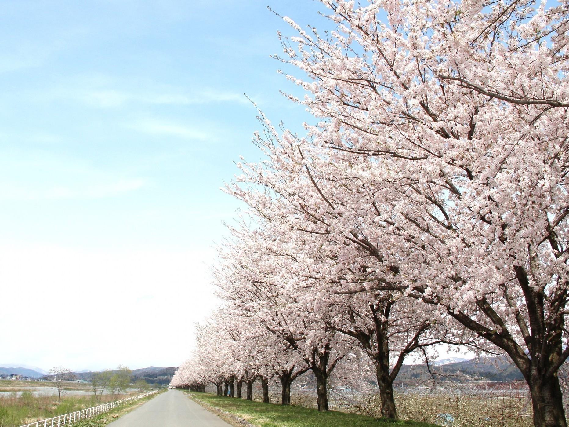 【旅の思い出に!紅花染め体験】~山形県の花・紅花を使って世界に一つだけのオリジナ...