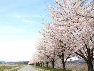 春には桜がとてもきれいです。