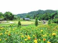 紅花畑にもお立ち寄りください。シーズンは7月です。
