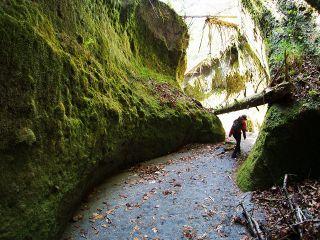 見上げるほどの苔に覆われた回廊!空気は澄んでいて涼しい~♪