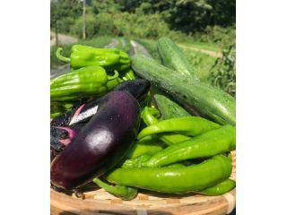 自然の中での野菜収穫を満喫してくださいね!